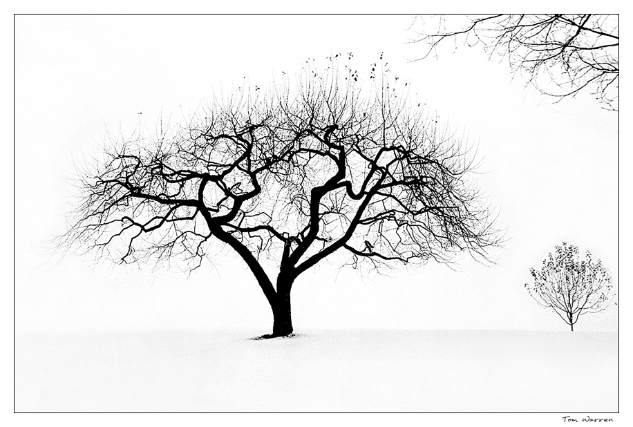 tree_wordpress2