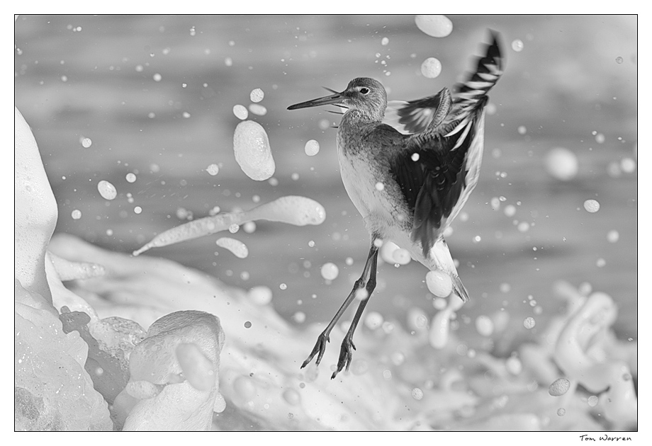 Willet_wordpress